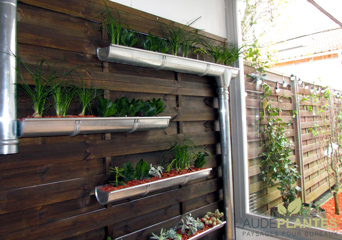 Micro organisme thermophile 2 for Terrasse mur vegetal