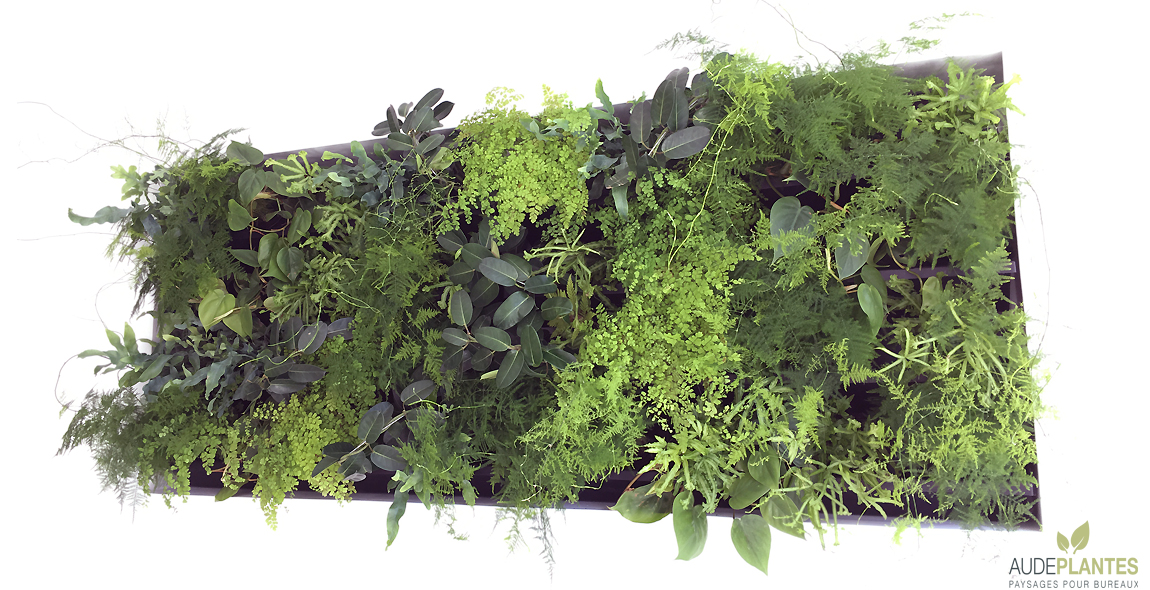 aude plantes mur vegetal pour bureaux with cloison vegetale interieure. Black Bedroom Furniture Sets. Home Design Ideas