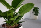 Plantes Aude Plantes