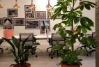 Aude plantes aménagement