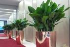 Aude plantes services entreprises espaces de travail aménagement
