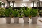 Aude plantes entretien coworking espace priofessionnel