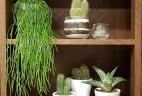 Petites plantes étagères Aude Plantes