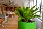Plantes et aménagement d'intérieur par AUDE Plantes