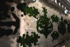 Aude plantes mur végétal stabilisée