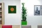 Aude Plantes plantes et paysages pour bureaux