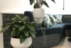 AUDE Plantes entretien et location de végétaux
