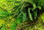 AUDE Plantes mur végétal stabilisé bien-être au travail plante stabilisee