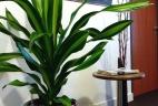 Aménagement intérieur Aude plantes