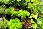 AUDE Plantes potager vertical