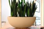 Aude plantes sansevieria glossaire pot bureau