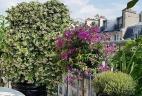 Aude plantes terrasse patio entreprise aménagement végétal