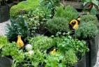 AUDE Plantes potager d'entreprise pour CASACO