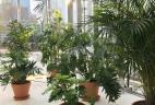 AUDE Plantes coworking location plantes schefflera amate areca terracotta