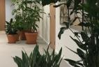 AUDE Plantes coworking location plantes san sevieria terracotta