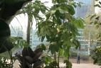 AUDE Plantes coworking location plantes schefflera amate terracotta