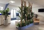 AUDE Plantes optimise et végétalise vos espaces