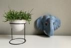 ma plante de bureau Rhipsalis by AUDE Plantes