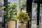 Aude plantes paysages aménagement bureau espace