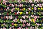 Aude plantes paysages pour bureaux entretien location mur vegetal patio terasse exterieur