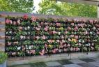 Aude plantes paysages pour bureaux entretien terasse patio mur végétal sur mesure