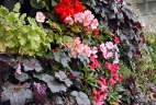 mur végétal automne