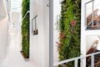 mur végétal d'exception