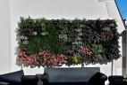 mur végétal hiver