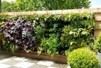 mur végétal printemps