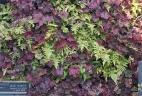 mur végétal d'ombre