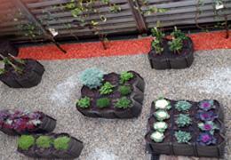 AUDE plantes végétalise CASACO - Malakoff