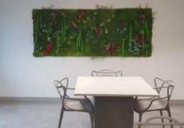 Tableaux et murs végétaux stabilisés 100% naturels