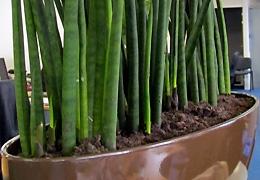 Nouvelles plantes dépolluantes pour Axione Malakoff