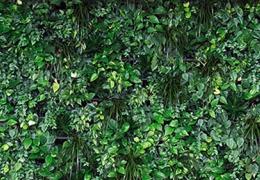 Les Murs Verts Végétaux