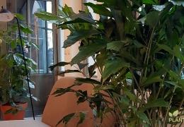 Glossaire des plantes d'intérieur pour bureau